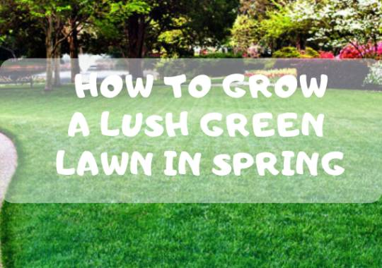 How to Grow a Lush Green Lawn in Spring